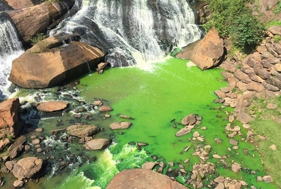 Reedy River Turns Bright Green