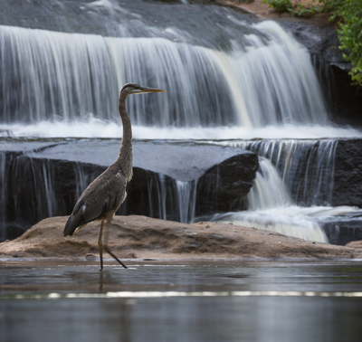 Fall in Love with the Reedy River PHOTO CONTEST